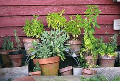 herb-garden-2294487_1920.jpg