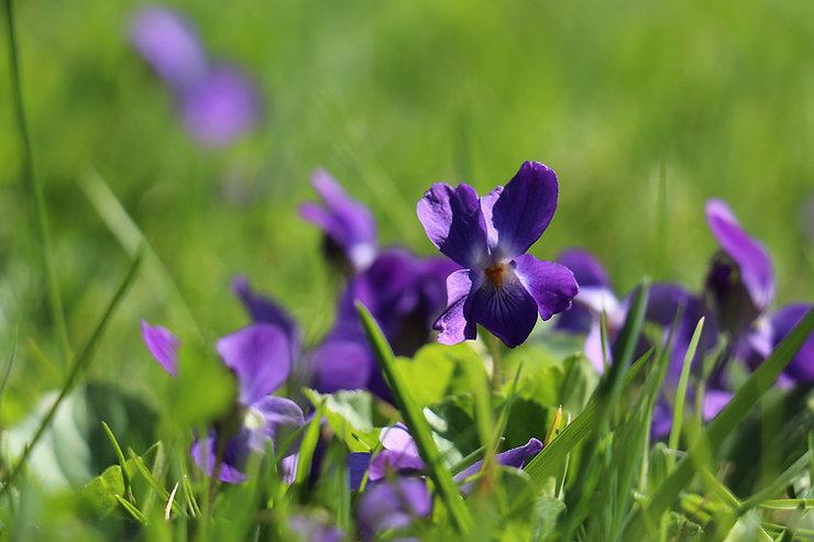 flower-3337233_1920.jpg