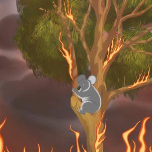 Wildlife in Crisis (Koala)