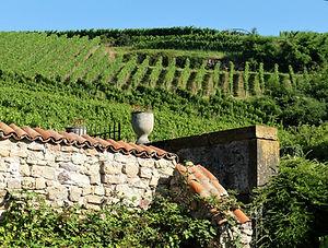 vignobles à Contz les Bains