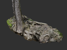 rooted tree.png