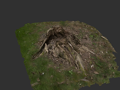 wood stump.png