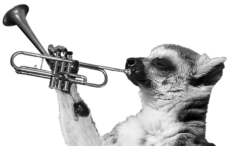 trumpet_edited.png