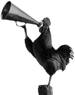 rooster bw_edited.png