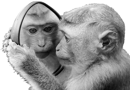 monkey%20mirror%20bw_edited.png