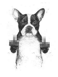 Censored dog