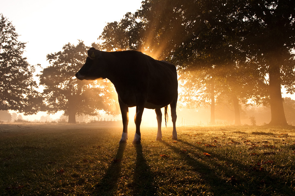 10 Great cows of our time