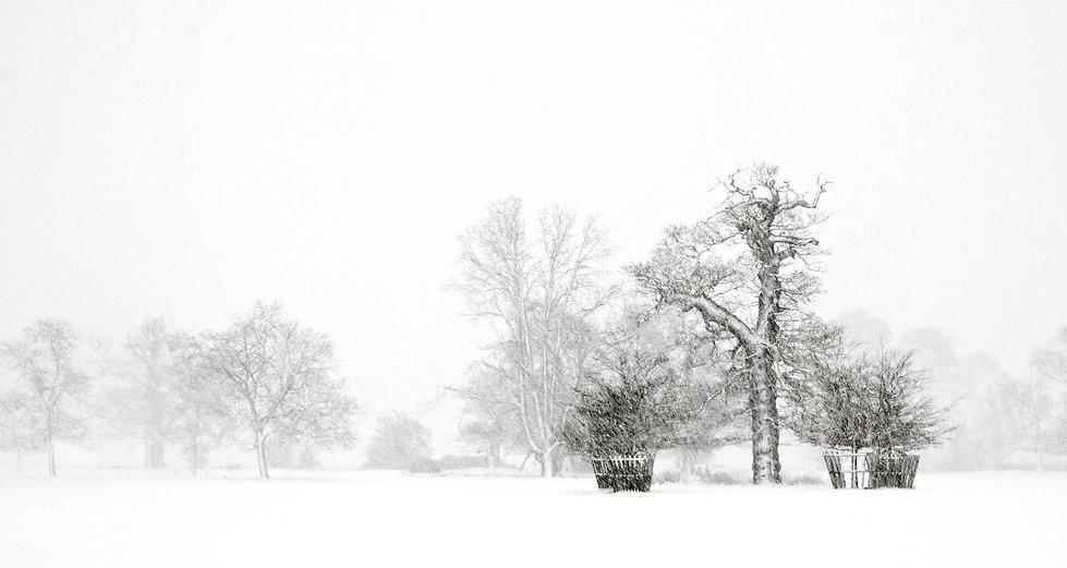 Snowfall8.jpg