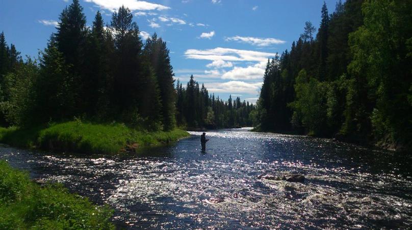 Sveriges bästa fiske i Ljusnan