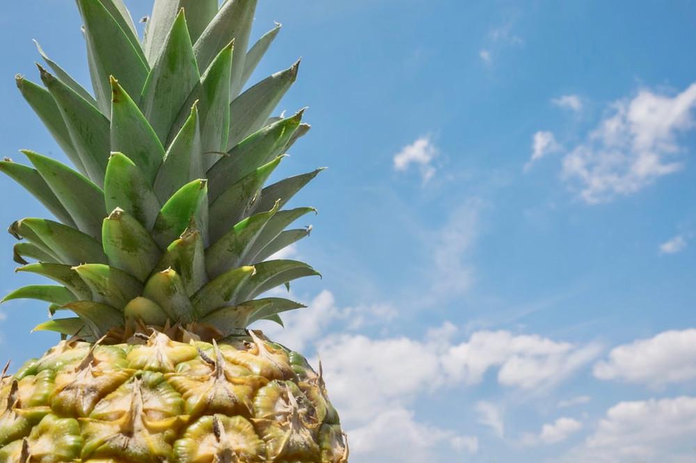 Pineapple sitting under sunshine