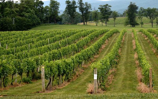 Breaux Vineyards