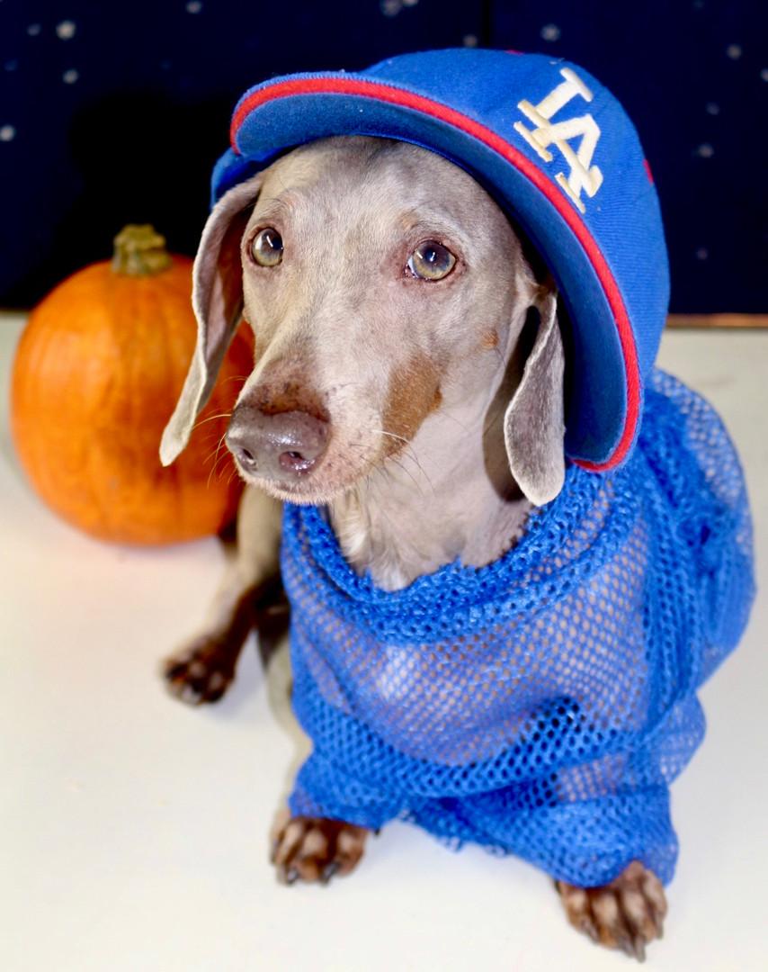 Dodger Dog