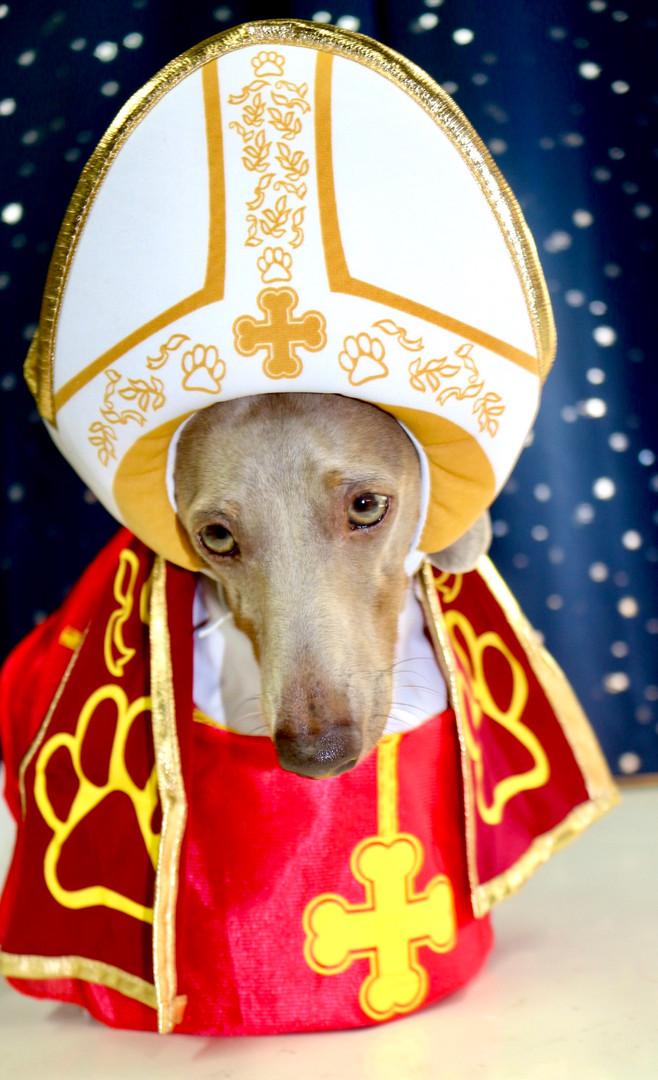 Papal Pup