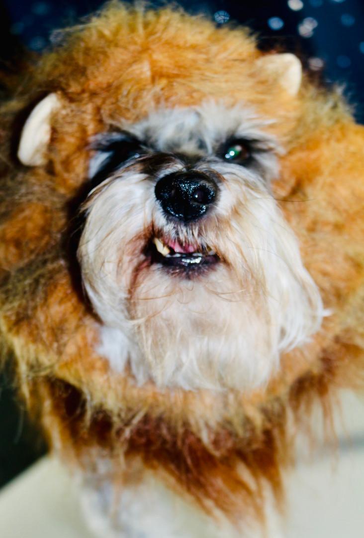 Scar: Lion King