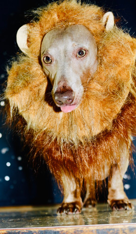 Mufasa: Lion King