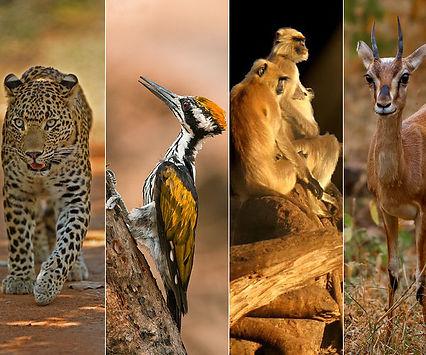ransafari.jpg