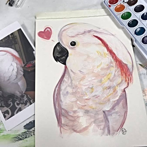 Bindhi the Cockatoo