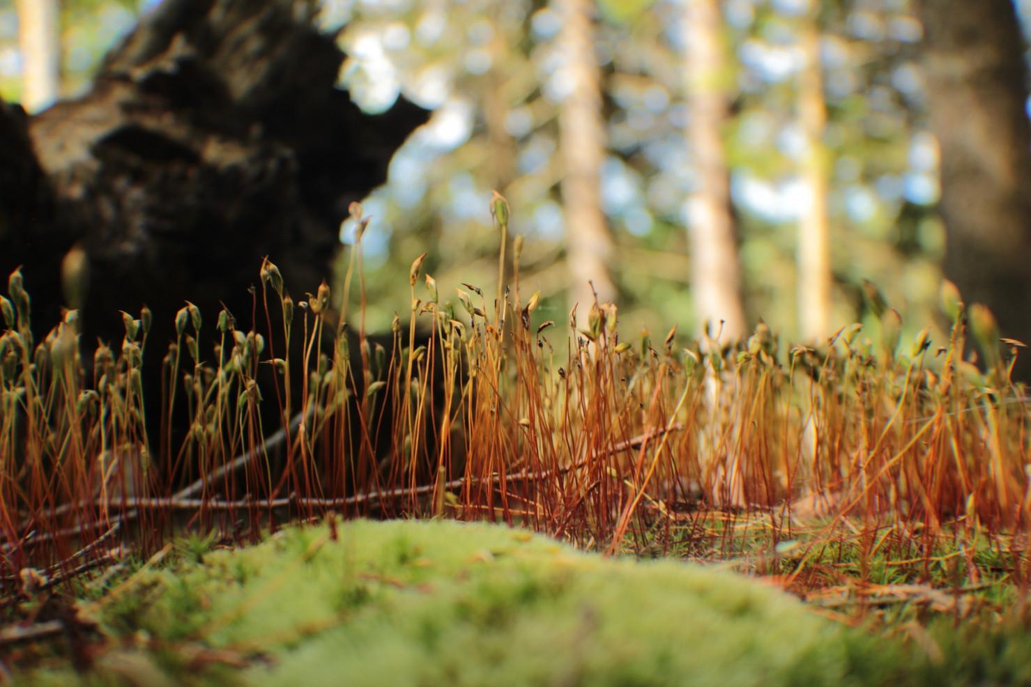 """Tiny Forest"" (credits: Gustavo Requena Santos)"