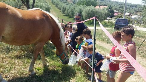 danno le mele ai cavalli.jpg