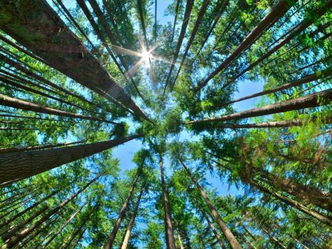 Produção e exportação dos produtos florestais crescem em 2017