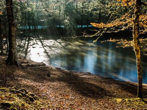 Itinerari di Vico del Gargano - Nella foresta Umbra i prodigi non sono impossibili