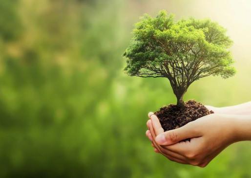 Un albero per ogni diciottenne