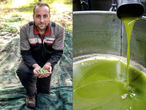Cia Capitanata per l'olivicoltura del Gargano