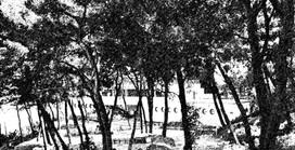 San Menaio (1950 – 1960): gli imperdibili anni