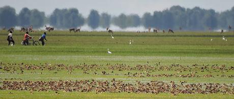 Fulvous Whistling Ducks, Chikuni, Bangweulu