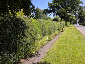 mix and match hedge