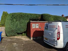 Engulfing the shed!