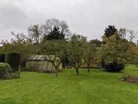 Fruit tree prune