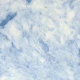 501-blue-on-white-t.jpg