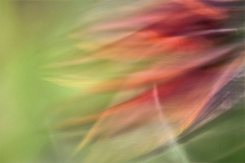 Flower Soleil 4