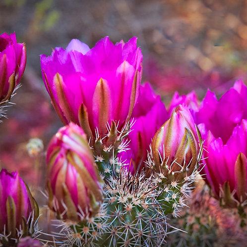 Blooming Purples