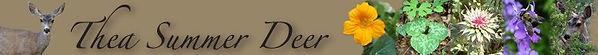 TSD banner logo.jpg