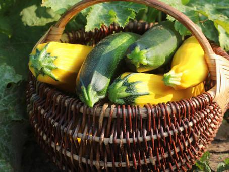 Zucchini & Yellow Squash Fritters