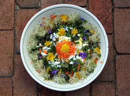 Edible Spring Weeds