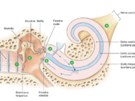 L'Otovent e il suo ruolo nel trattamento dell'idrope