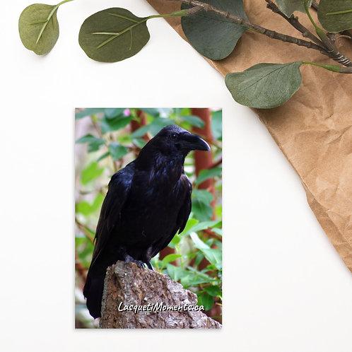 Lasqueti Raven