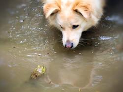 dogmeetsfrog