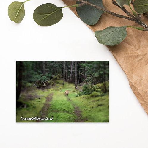 Postcard -Down the Trail