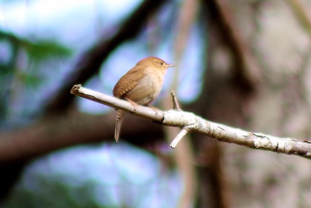 littlebird.png