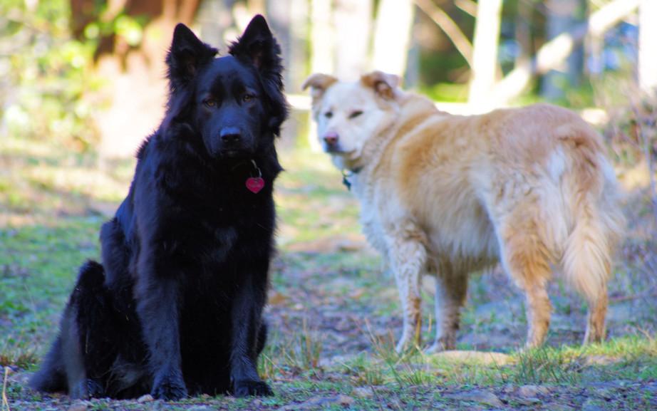 Nahla and Bear
