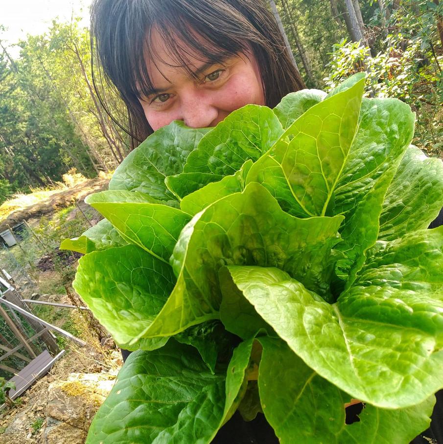 lettuceme.jpg