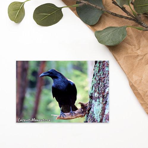 Postcard - Raven Watch