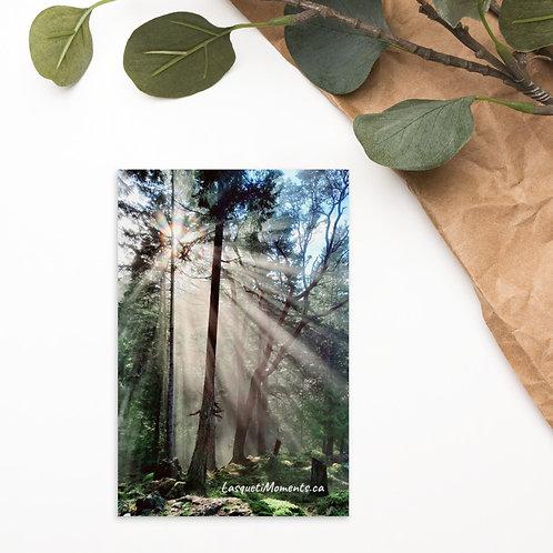 The Light Postcard
