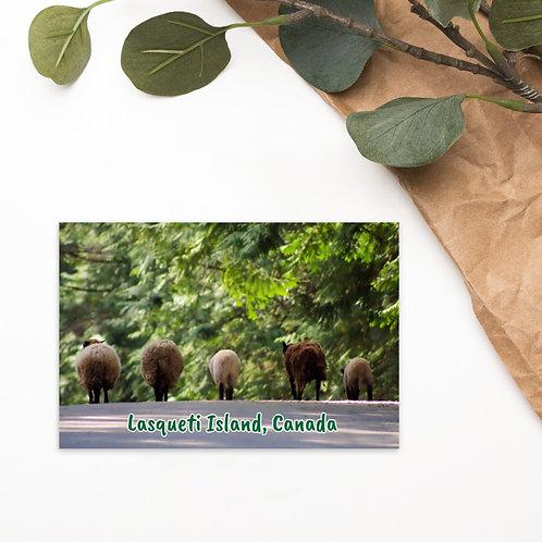 Standard Postcard - Lasqueti Island