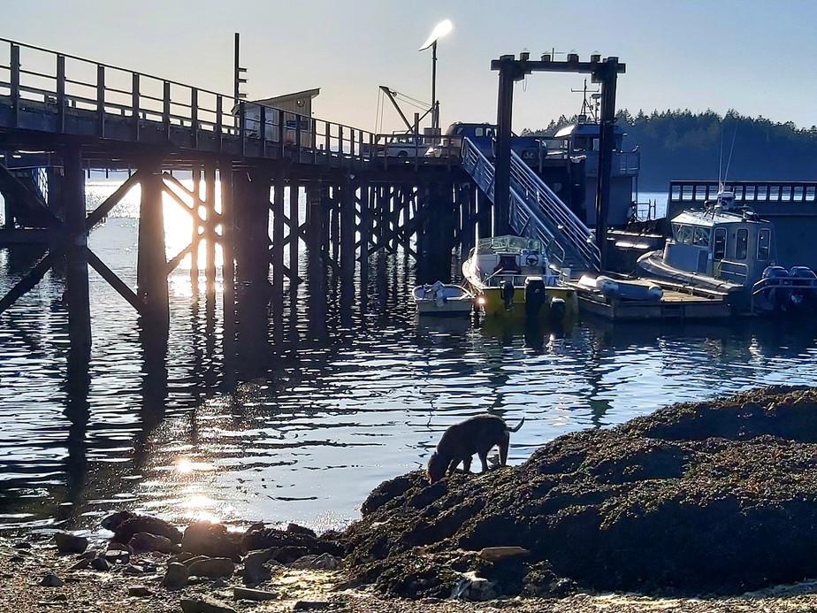 dockdog.jpg