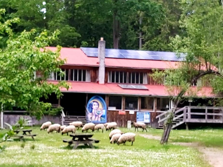 sheephall.jpg